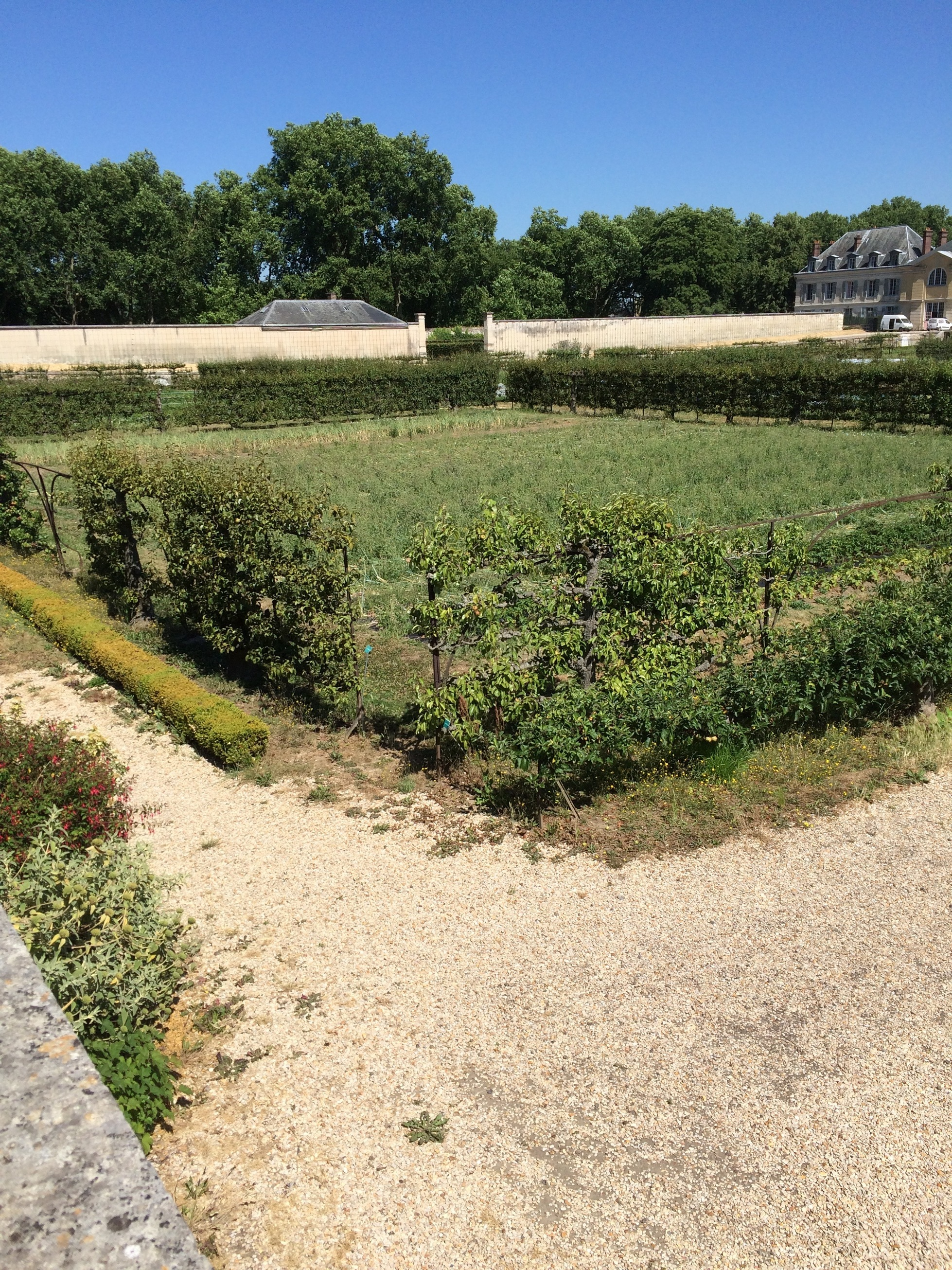 espalier trees at le potager du roi in versailles. Black Bedroom Furniture Sets. Home Design Ideas